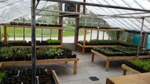 Sale - Large Variety of Organic Seedlings @ Grape Lakes Farm & Vineyard