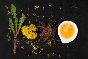 Workshop - Dandelions - The Prized Wild Edible @ Grape Lakes Farm & Vineyard